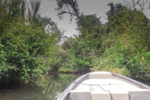 boat through the jungle