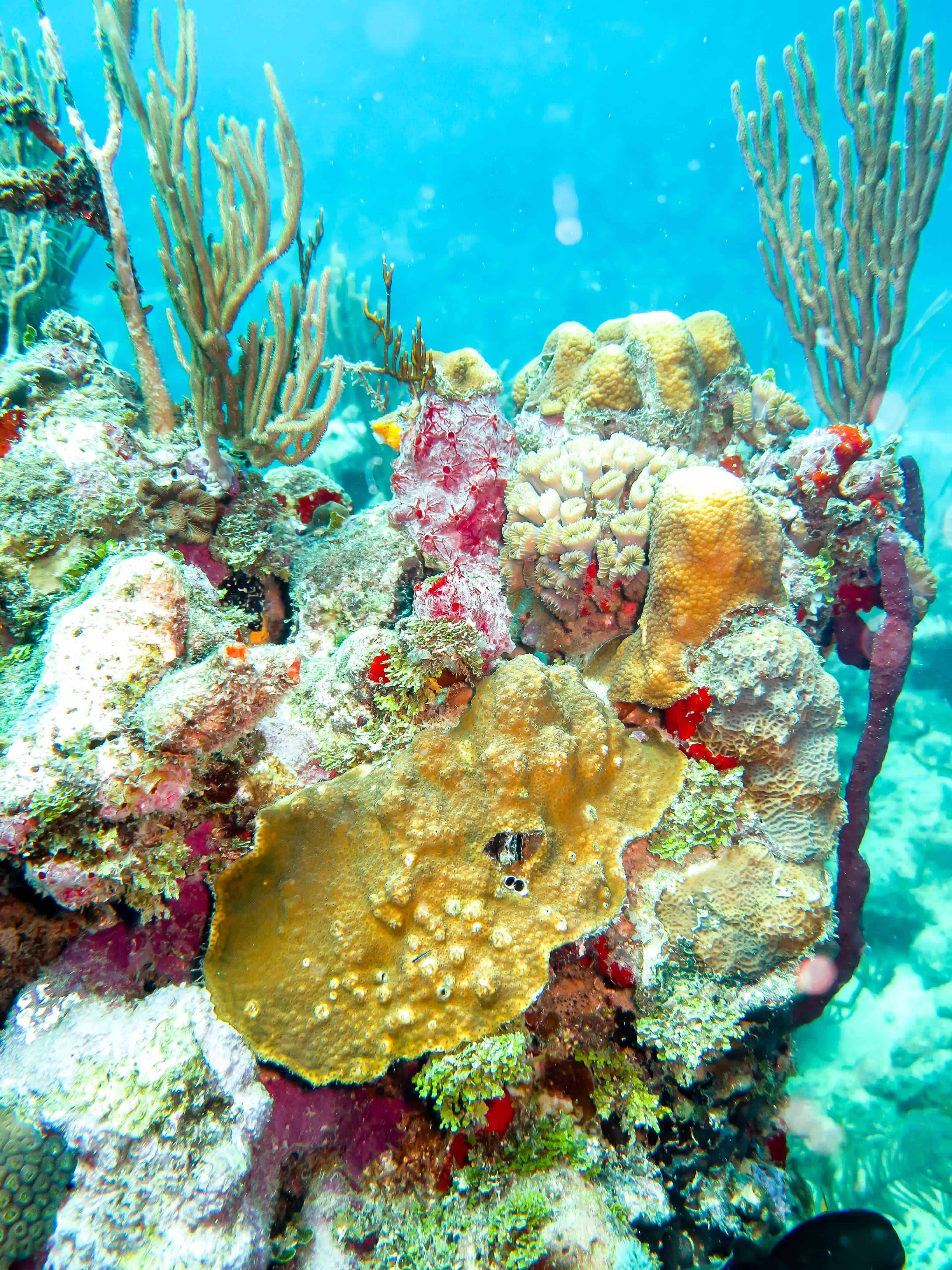 Coral reefs while diving in utila