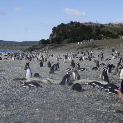 lora and penguins in argentina