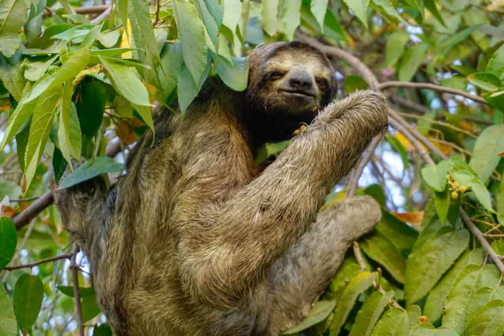 sloth what to do in monteverde costa rica