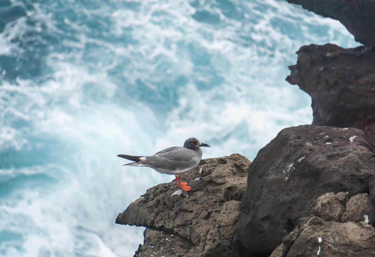 Cliff on San Cristobal island in the galaoagos