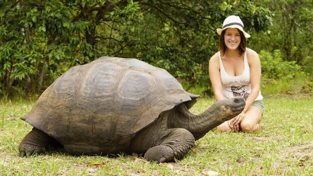 Hanging out with giant tortoises in the Galapagos Islands