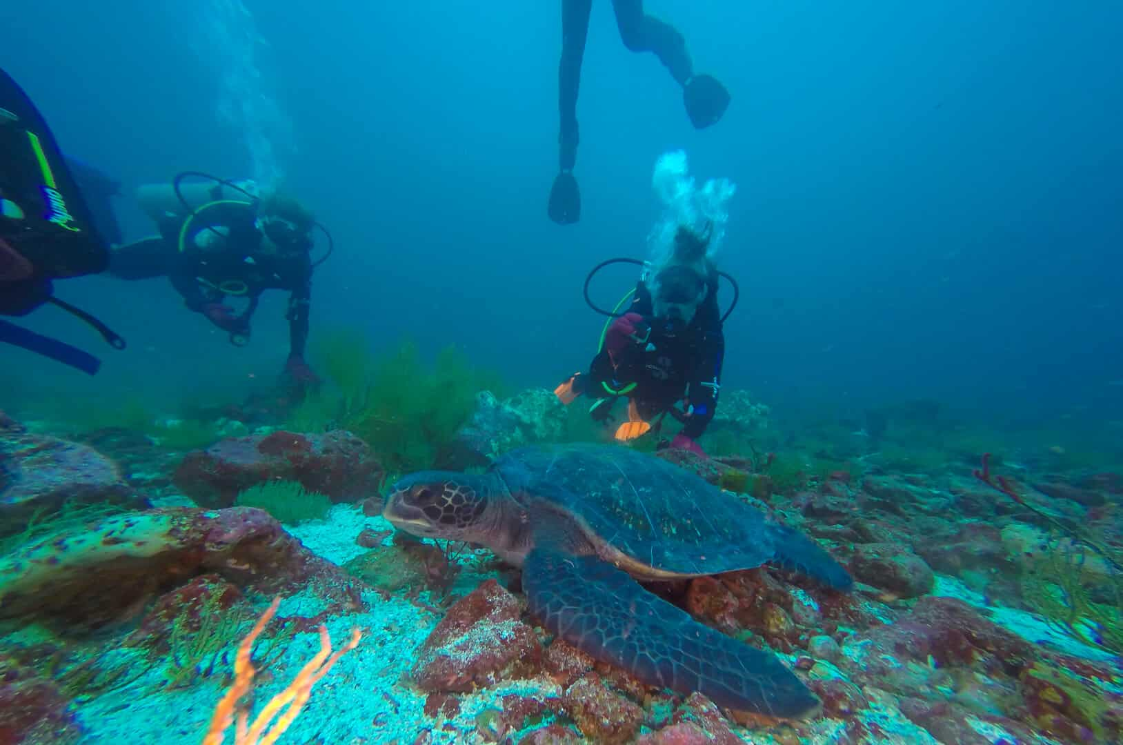 Diving in the Galapagos with sea turtles