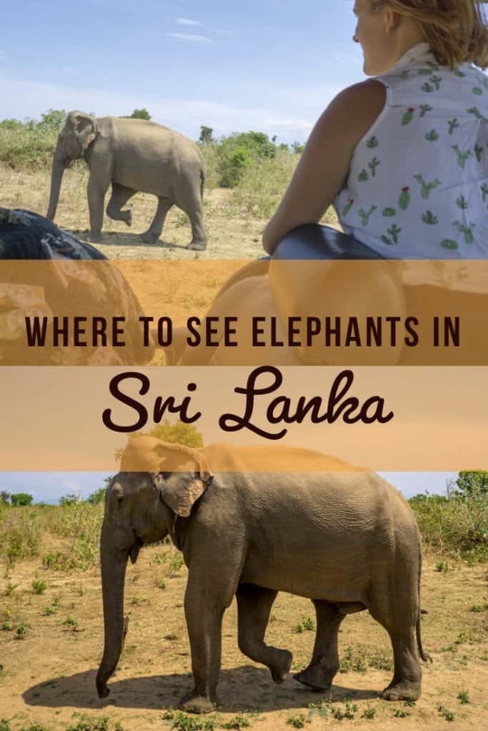 Heading to Sri Lanka? Don't miss the chance to see the incredible Asian elephant! Sri Lanka is a great place to go on safari for elephants. Find out how to see elephants at Udawalawe National Park in Sri Lanka. #SriLanka #Elephants