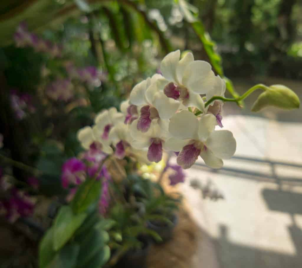 orchid garden monteverde tours
