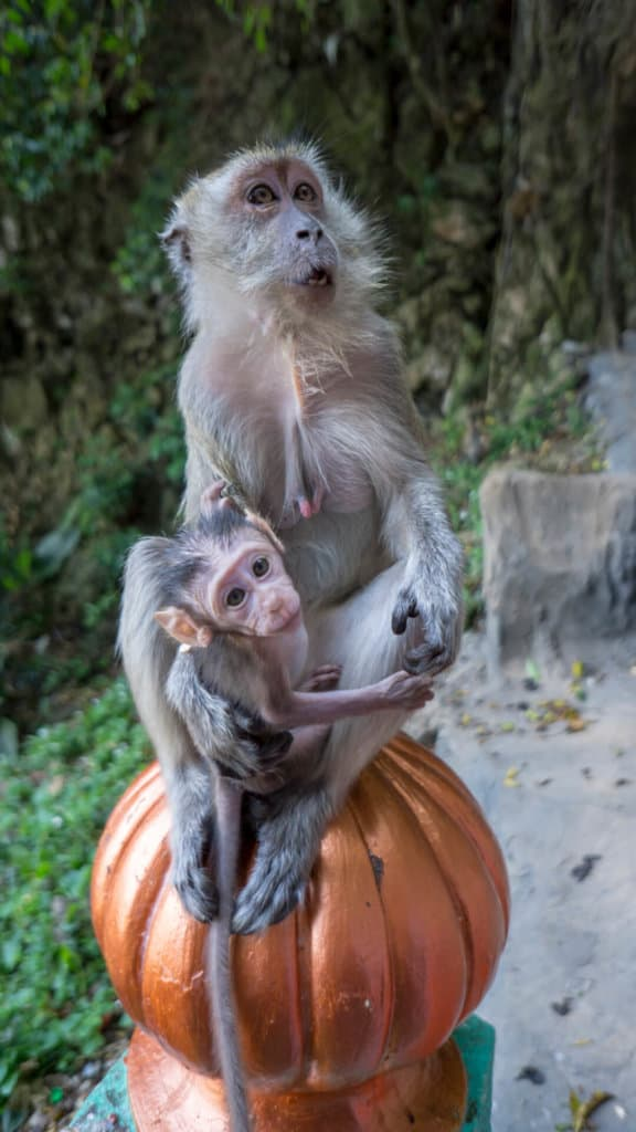 Adorable little monkey family walking up the stairs to Batu Caves