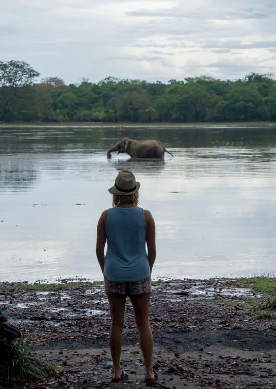 Watching an elephant bathe