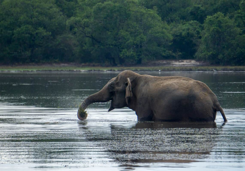 7 amazing ways to see wildlife in Sri Lanka