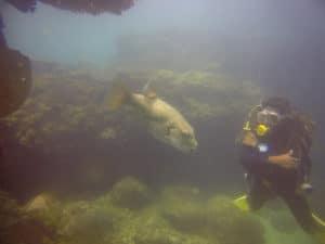 underwater sri lanka safari