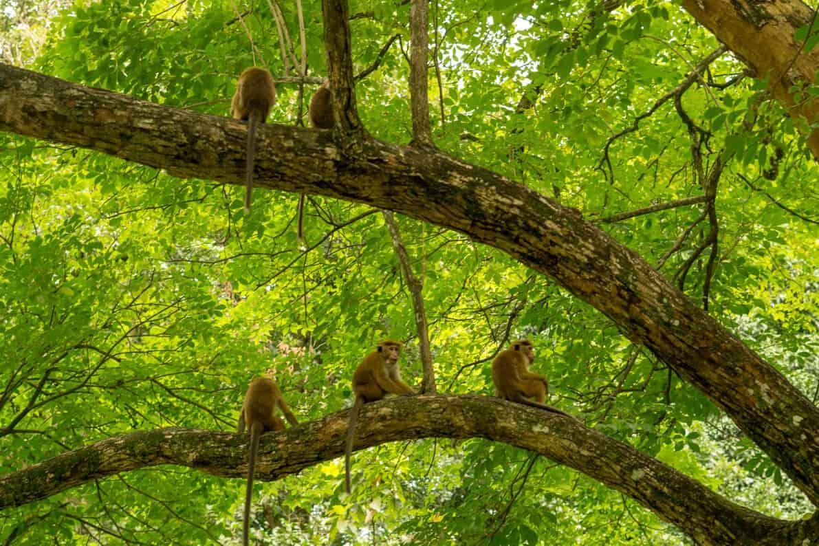 """Monkeys"
