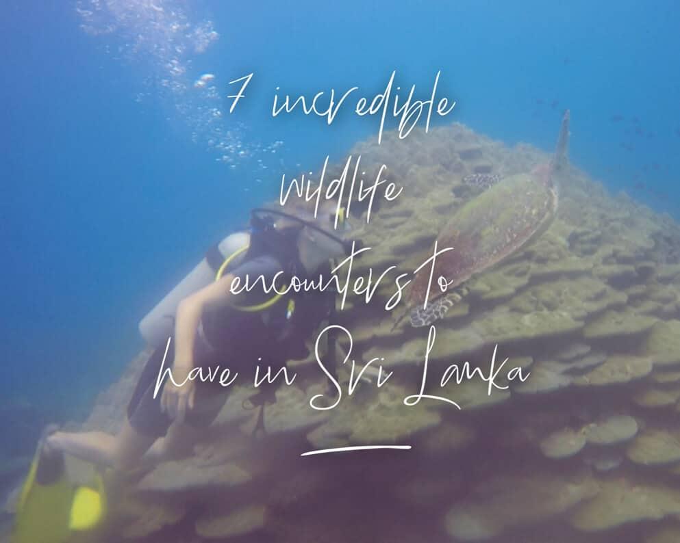 cover photo for wildlife encounters sri lanka