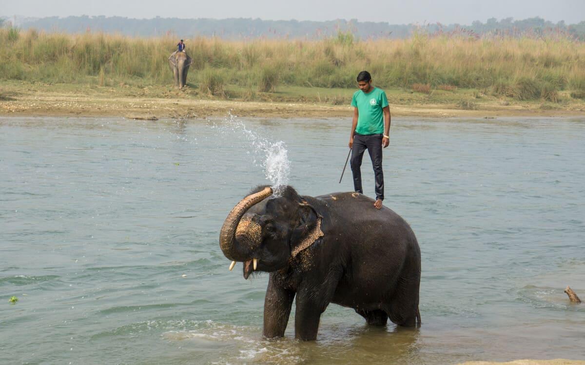 Elephant bathing in Chitwan national Park