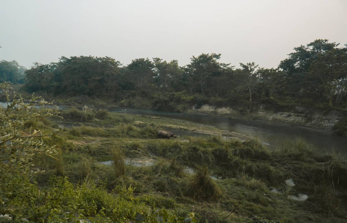 A wild rhino in the river surrounding Chitwan National Park