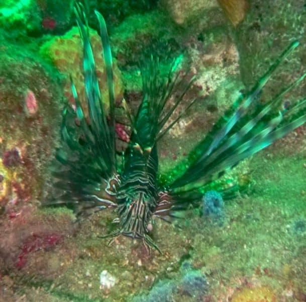 scuba diving colombia