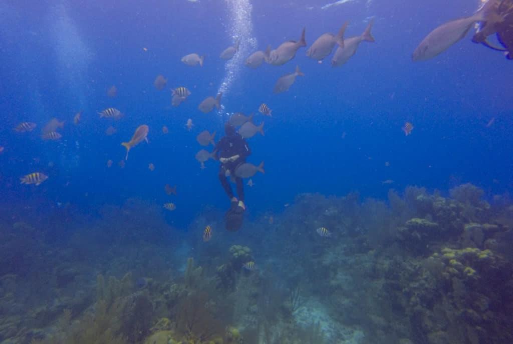 Long Caye Aquarium dive