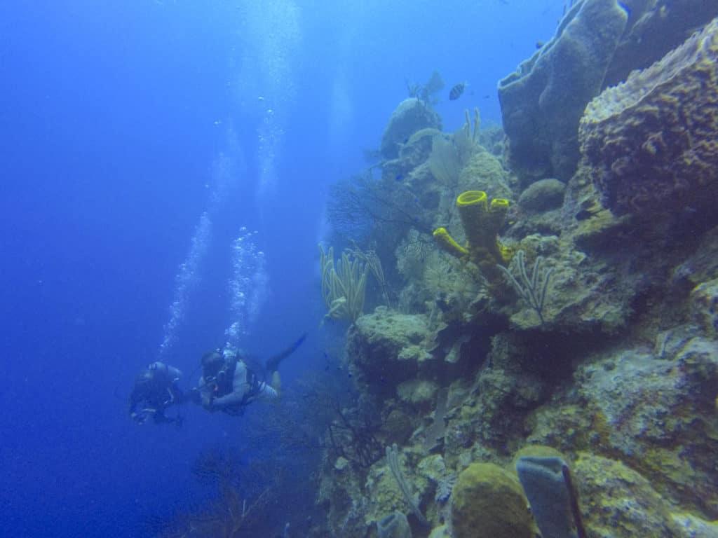 Long Caye Aquarium Dive in Belize