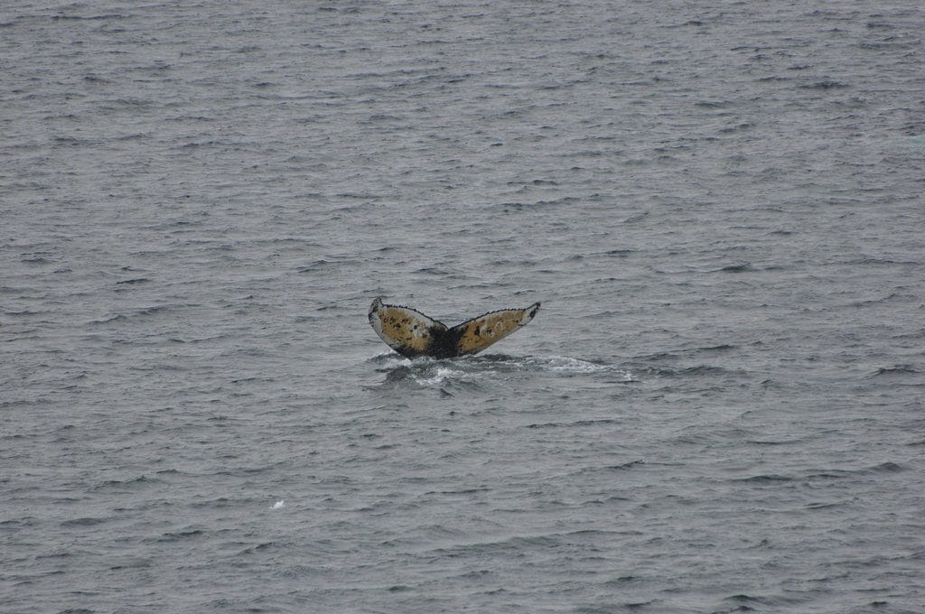Whale Watching in Antartica