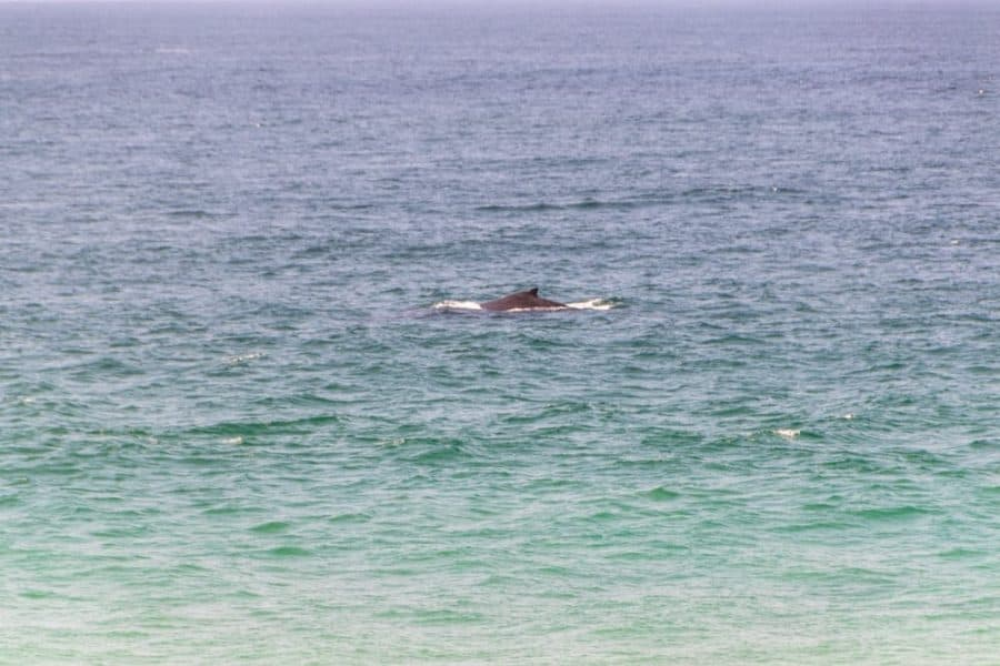 Whale Watching in Tofo, Africa
