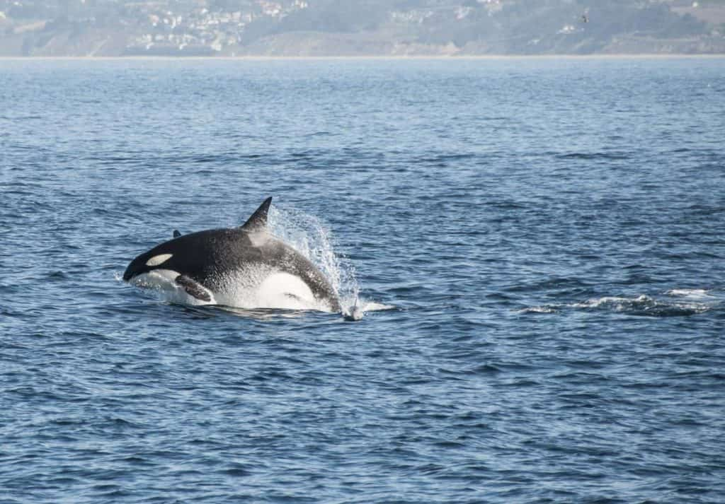 Whale Watching in Monterey Bay, California