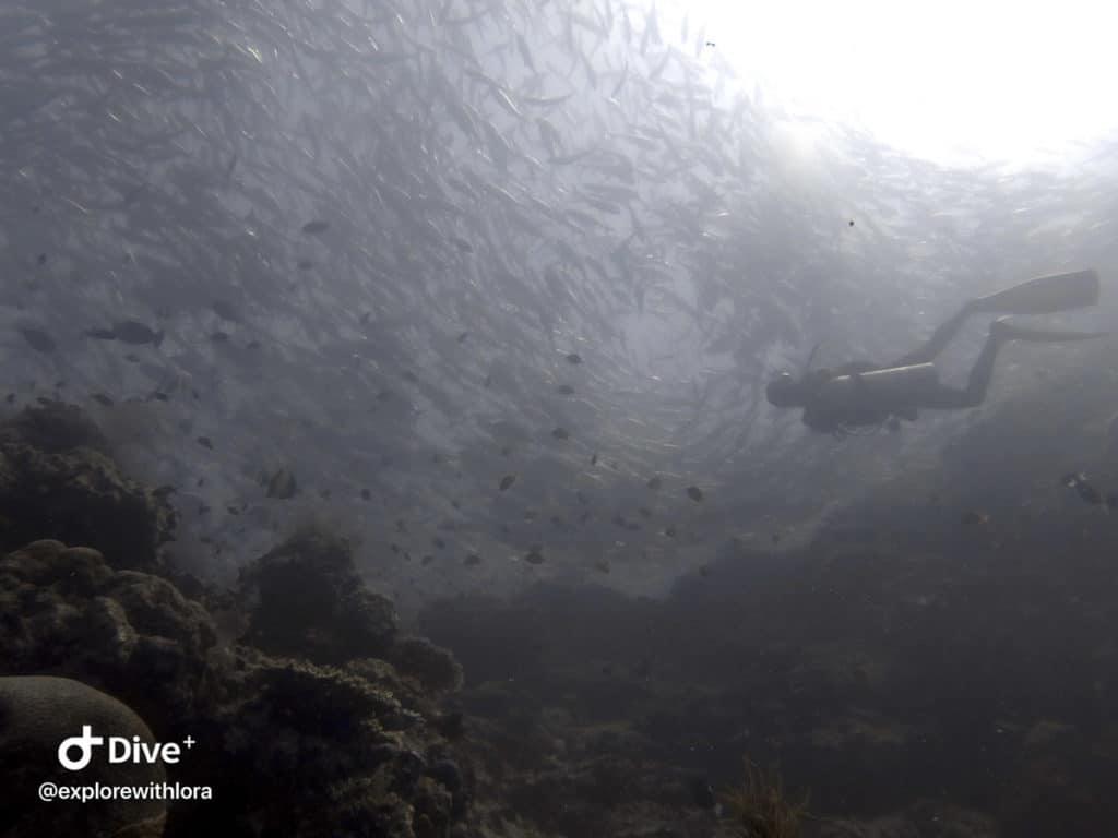Baracuda Point dive Sipadan