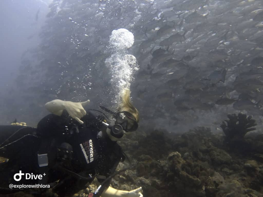 diving at Barracuda point