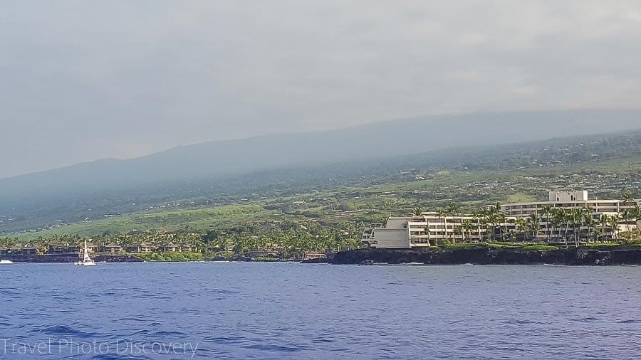 whale watching big island hawaii