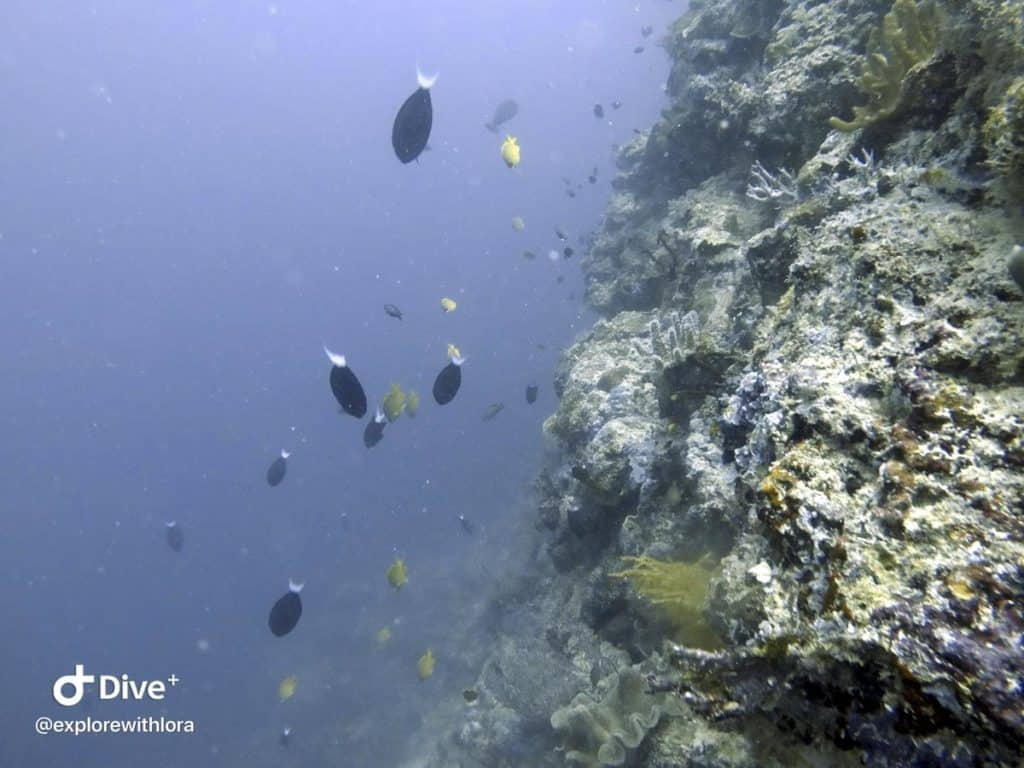 Diving at Sipadan Island