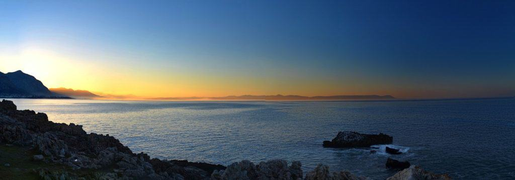whale watching in cape town africa