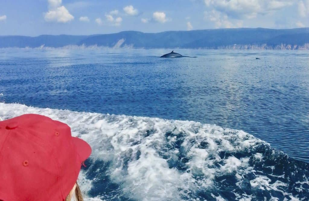 whale watching cape breton nova scotia