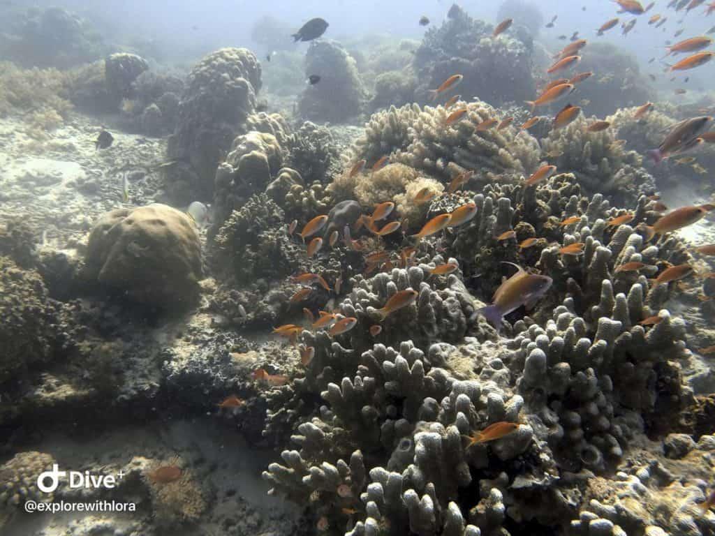 Diving South Point Sipadan