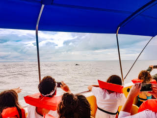 Whale Watching in Uvita, Costa RIca