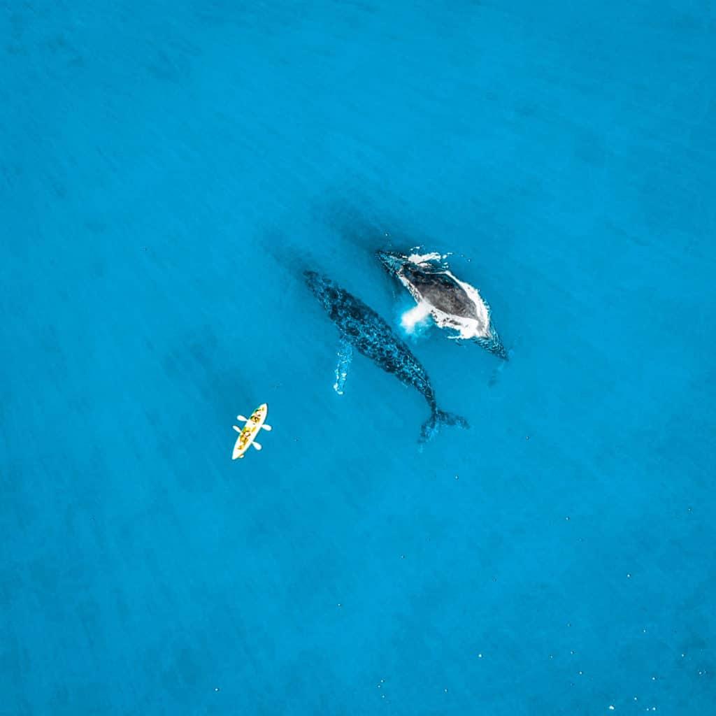 Whale Watching in Byron Bay, Australia