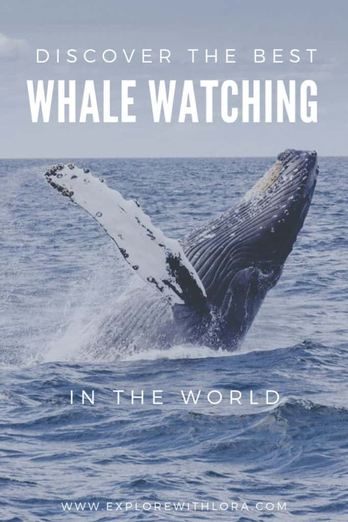 Whale watching is one of the most amazing wildlife encounters to have while traveling. Check out this post to discover the BEST whale watching destinations around the world, as recommended first hand by travel bloggers. Find your next whale watching destination! #WhaleWatching #WildlifeEncounters #Australia #NewZealand #SouthAmerica #Africa #Antartica