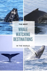 Whale watching is one of the most amazing wildlife encounters to have while traveling. Check out this post to discover the BEST whale watching destinations around the world, as recommended first hand by travel bloggers. Find your next whale watching destination! #WhaleWatching #WildlifeEncounters #Canada #America #CentralAmerica #Asia #Europe