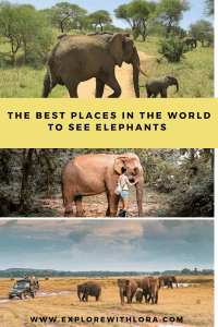 Are you interested in an elephant encounter? Make sure it's an ethical one! Discover the best places to ethically encounter elephants in Africa and Asia.