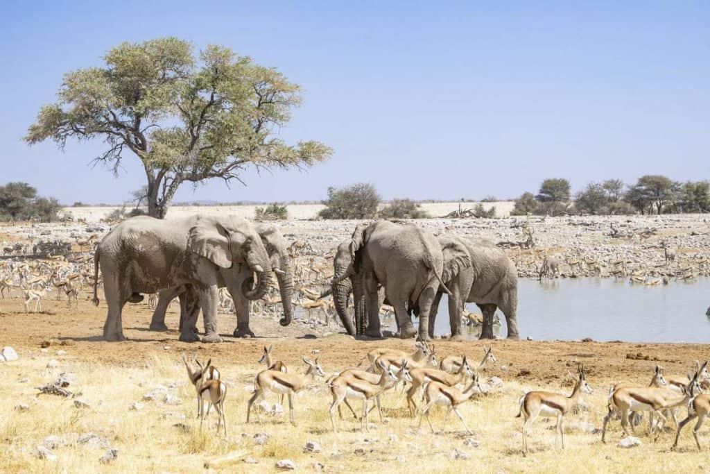 Ethical Elephant Encounter in Etosha National Park