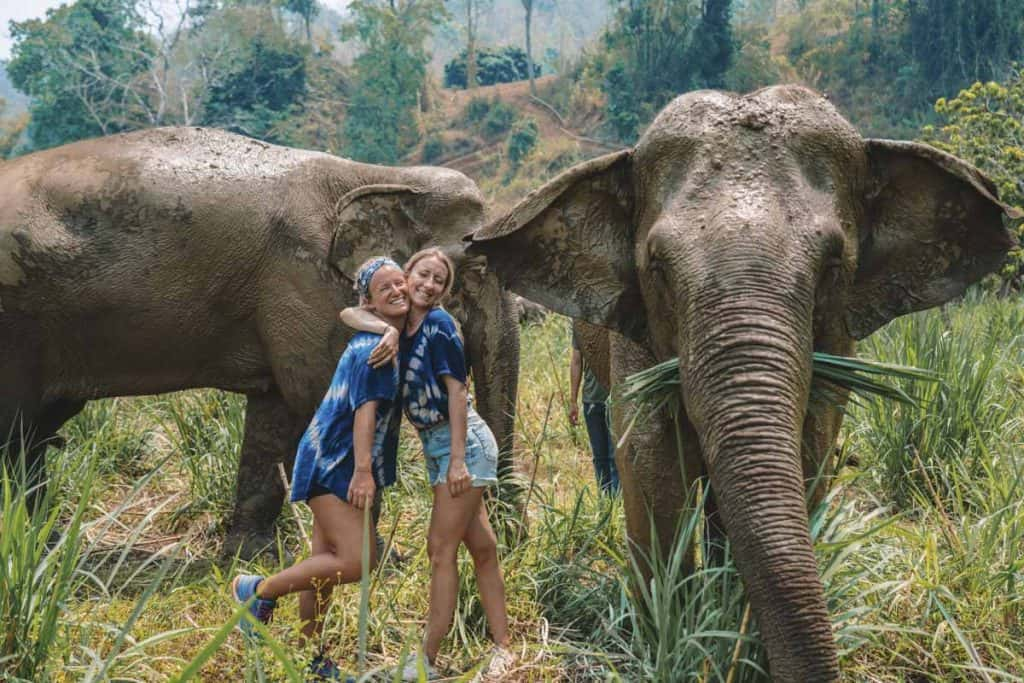Elephants at Elephant Green hill, Chiang Mai, Thailand