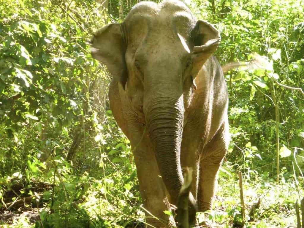 Mahouts Elephant Foundation, Thailand