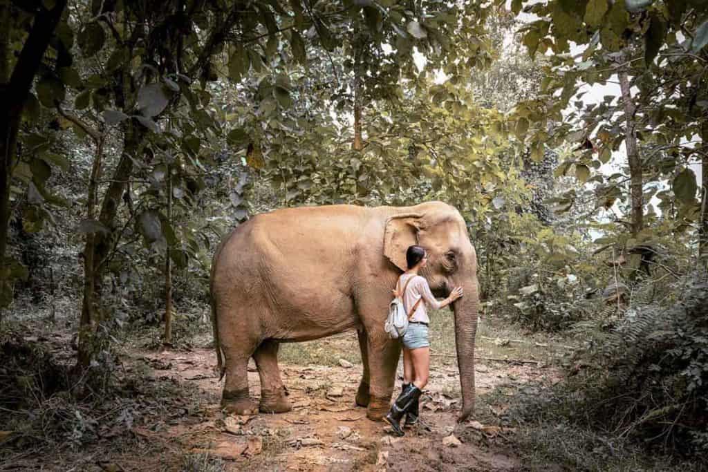 Elephants at Mandalao, Laos