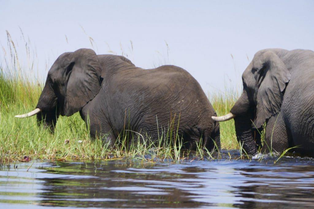 Watching Elephants in the Okavango Delta, Botswana