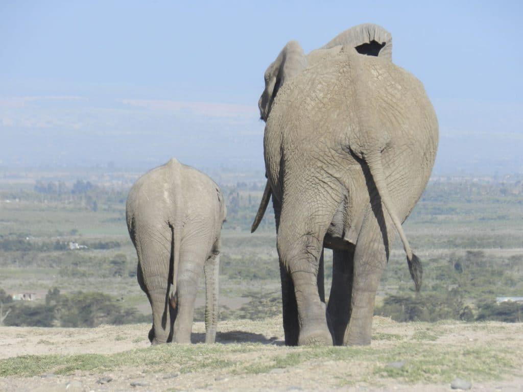 Elephants in Ol Pejeta, Kenya