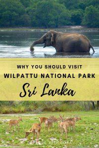 pinterest pin of wilpattu national park