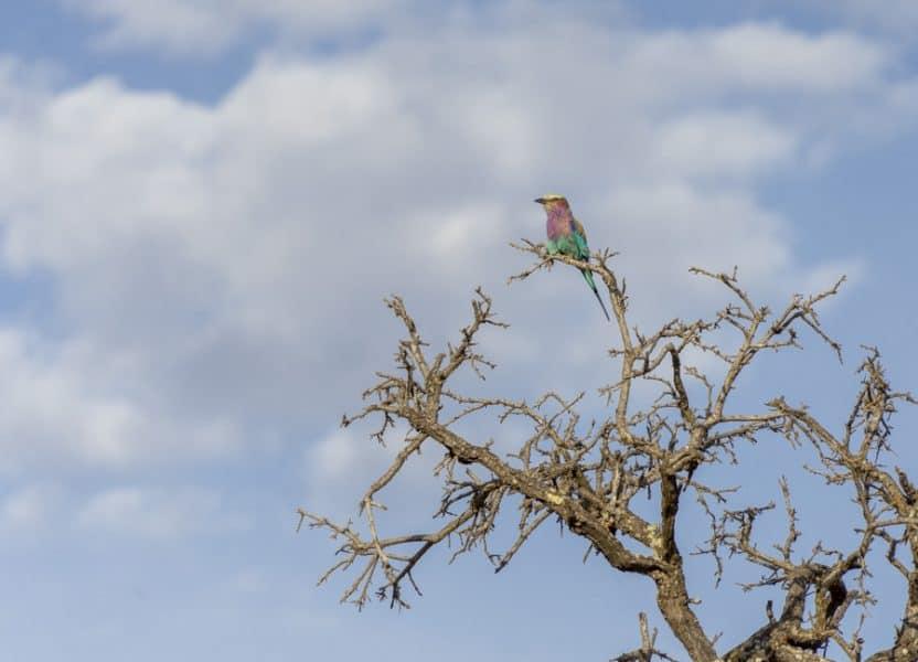 colorful bird in tree