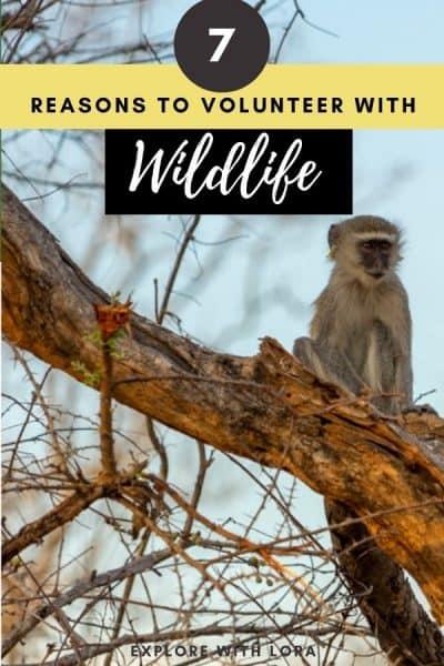 volunteering with wildlife pinterest pin