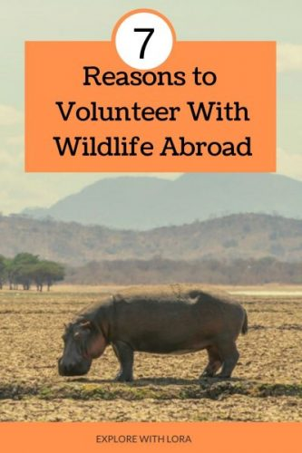 volunteering wildlife conservation project pinterest pin