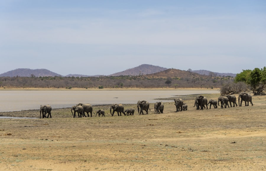 a group of elephants in Malawi