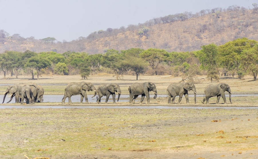 Observing a group of elephants at Vwaza Marsh Game Reserve