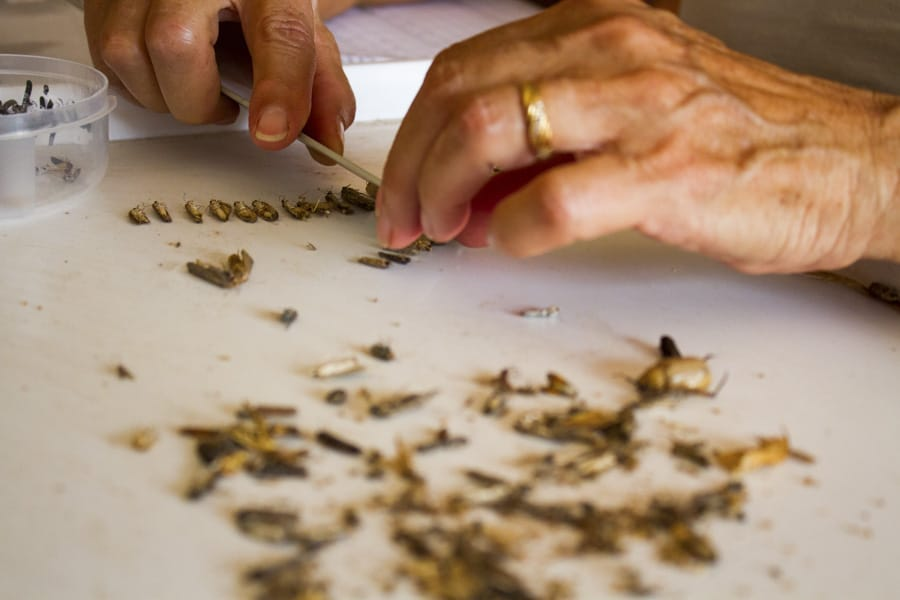 insect processing with biosphere expeditions