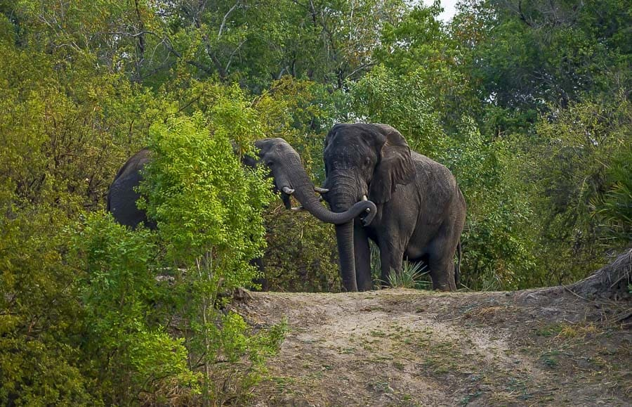 elephants on a sunset cruise in livingstone