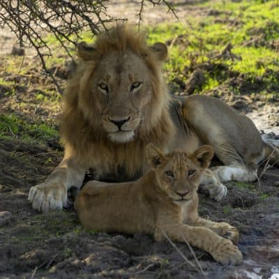 How to go on an Affordable Safari at South Luangwa
